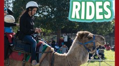Camel Rides & Animal Farm